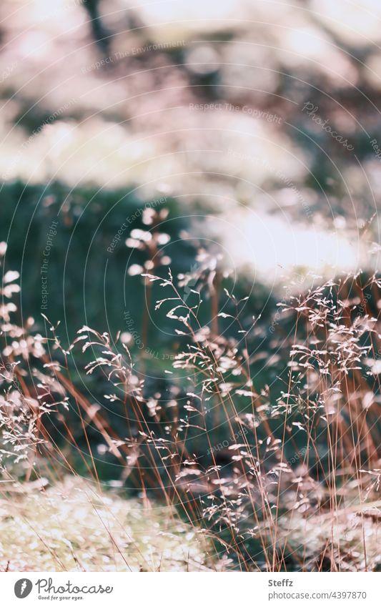 Trockenes Sommergras. Sanfter Wind, flüstert ins Ohr. Gras trockenes Gras Windgeflüster Sommerwiese Gräser Haiku Wiese August Sommerwind Gras im Wind