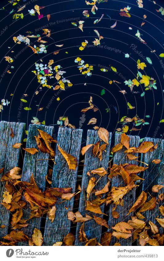 Laub, dass auf Bretter fällt hochformat Umwelt Natur Landschaft Wasser Herbst Schönes Wetter Baum Blatt Garten Park Seeufer Insel Fluss Gefühle Stimmung Tugend