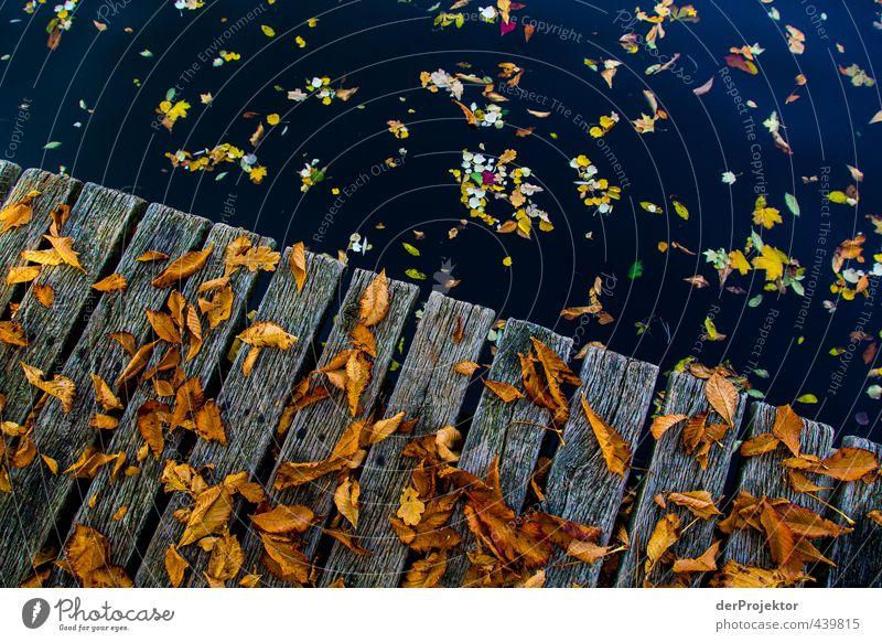 Laub, dass auf Bretter fällt Umwelt Landschaft Urelemente Wasser Herbst Schönes Wetter Baum Blatt Garten Park Flussufer Insel Gefühle Stimmung Freude Glück