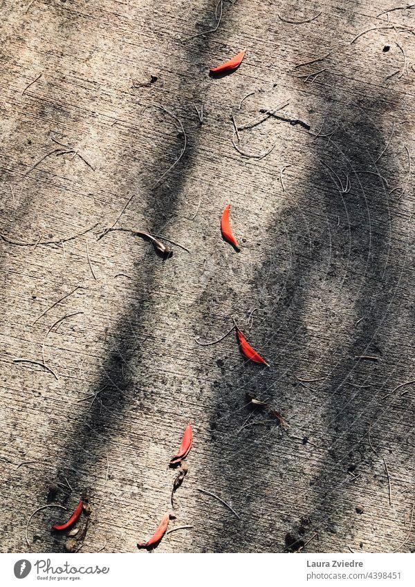 Blätter auf dem Boden und die Schatten Baumblätter Herbst Herbstlaub Herbstfärbung Blatt herbstlich Herbstwetter Herbststimmung Herbstbeginn Umwelt Natur
