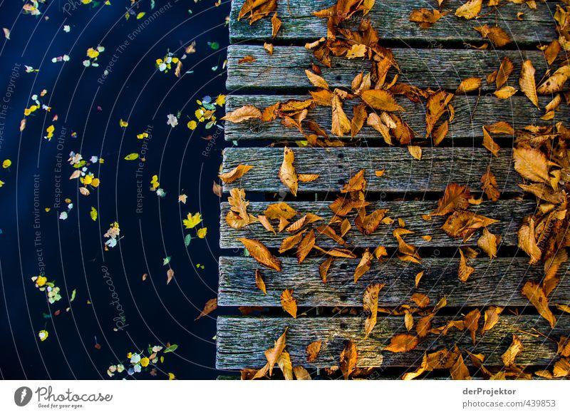Herbstlaub auf Holz und Wasser Umwelt Natur Landschaft Klima Schönes Wetter Baum Blatt Insel Gefühle Lebensfreude Vorfreude Wahrheit Ehrlichkeit authentisch