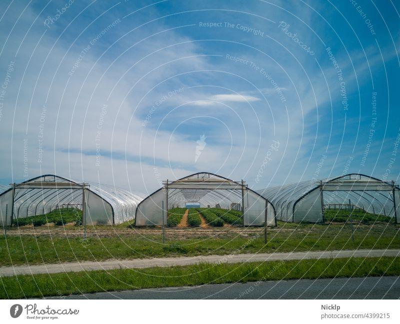 Drei Gewächshäuser (Folientunnel) mit Erdbeerplanzen vor blauem Himmel mit Wolken Agrarprodukt Agrarwirtschaft agrarwirtschaftlich Erdbeerfeld Erdbeeren