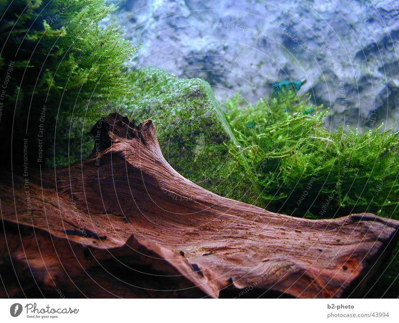Unterwasserwelt Wasser Pflanze Holz Stein Wärme Landschaft leer Fisch Physik Aquarium Wurzel Algen