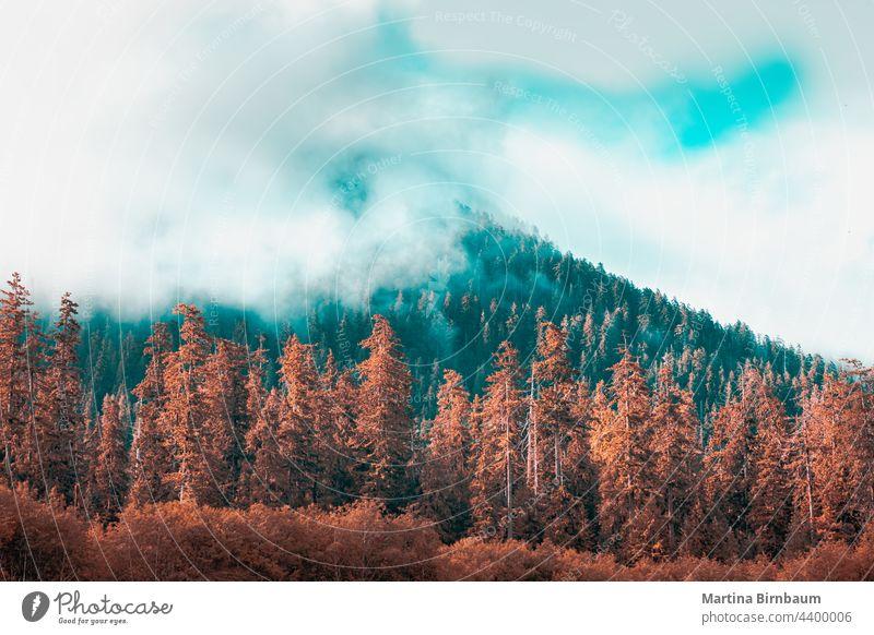 Bäume am Ufer des Hoh-Flusses im Olympic National Park mit Wolken in den Baumkronen hoh HO-Regenwald Krickente im olympischen Nationalpark orange Washington