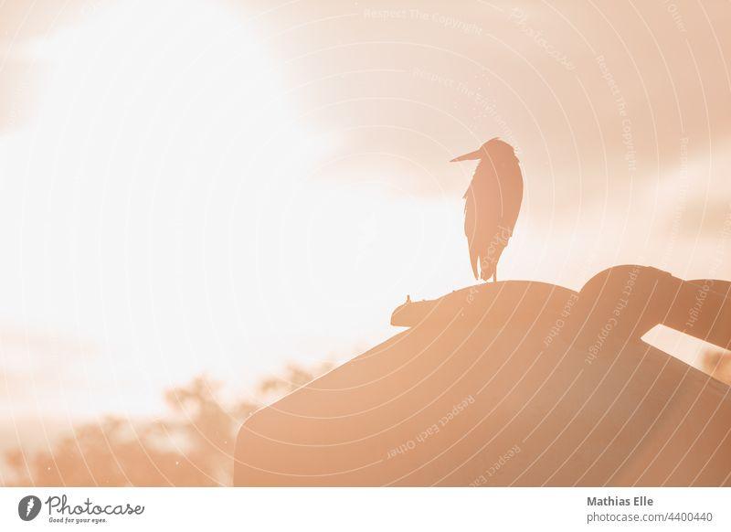 Graureiher genießt die Abendsonne Horizont Licht Außenaufnahme Menschenleer Sonnenstrahlen Gegenlicht Landschaft Sonnenuntergang Sonnenlicht Sommer Natur