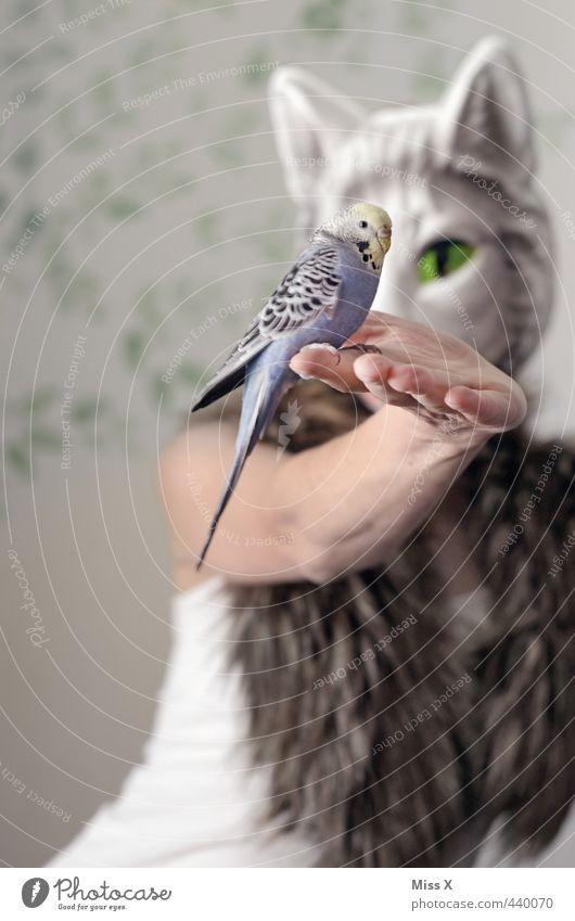 3000 alles dabei Mensch 1 Haustier Katze Vogel 2 Tier Fressen Wellensittich Fell Katzenkopf Maske auffressen Hand Katzenauge Futter Farbfoto Gedeckte Farben