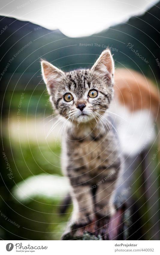 Miez, Miez - Kätzchen gehen immer - wenn sie so süüüüüß sind Katze Natur schön Tier Auge Umwelt Tierjunges Gefühle Stimmung niedlich Neugier Ohr Haustier Bayern