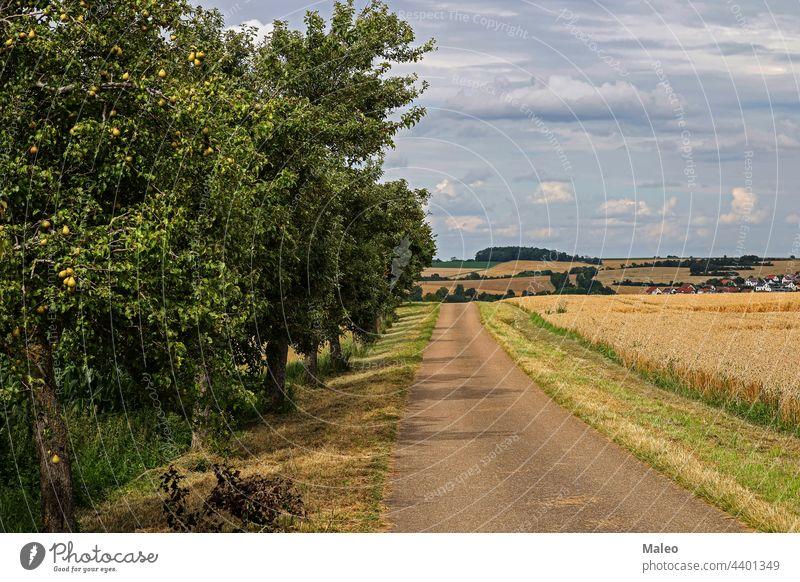 Sommerlandschaft mit Weizenfeldern und Straße Feld Natur ländlich Himmel Landschaft Sonne grün Baum Horizont Sonnenaufgang Wiese Gras Frühling Blumen