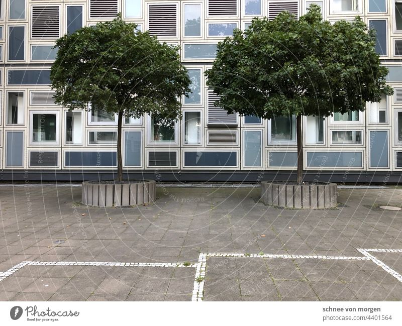 Stadtgeschichten Baum Köln Gebäude Architektur Parkplätze Raum Straße Geometrie Tristesse akkurat Außenaufnahme Bauwerk Fenster Haus Tag Menschenleer