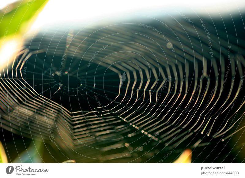 Spinnennetz Sonnenaufgang Seil Makroaufnahme