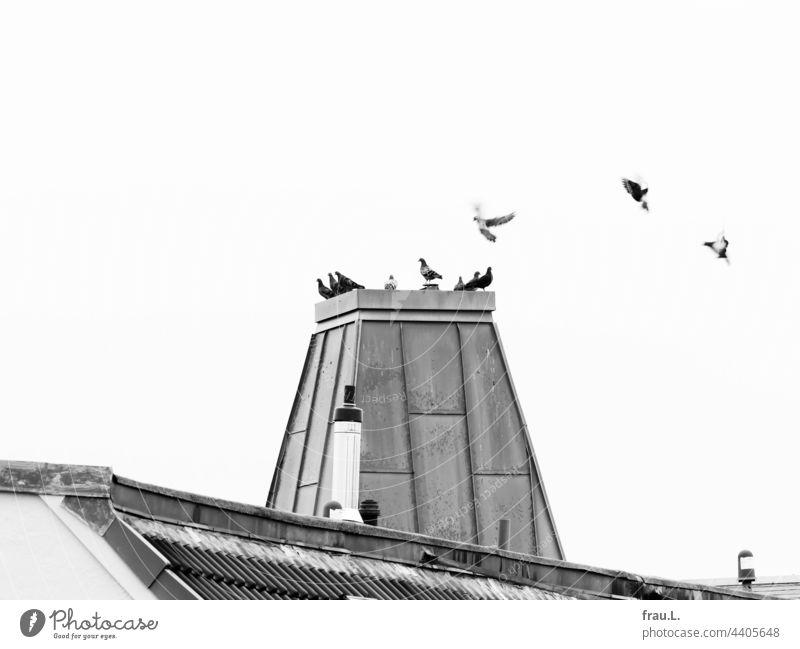 Taubenturm Vögel Meeting Schonstein Dach fliegen sitzen Turm