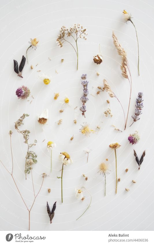 Flatlay von fast vertrockneten Blüten und Gräser Getrocknet getrocknete Pflanze Natur Sommer Wildpflanze natürlich Wildblumen Trocken Trockenblume Farbfoto