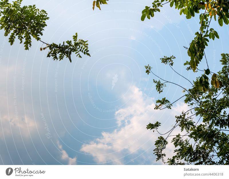Ein niedriger Aussichtspunkt auf die Blätter eines Baumes, mit Blick in den Himmel durch Licht Sonne Wald grün Niederlassungen Natur Sonnenlicht Hintergrund