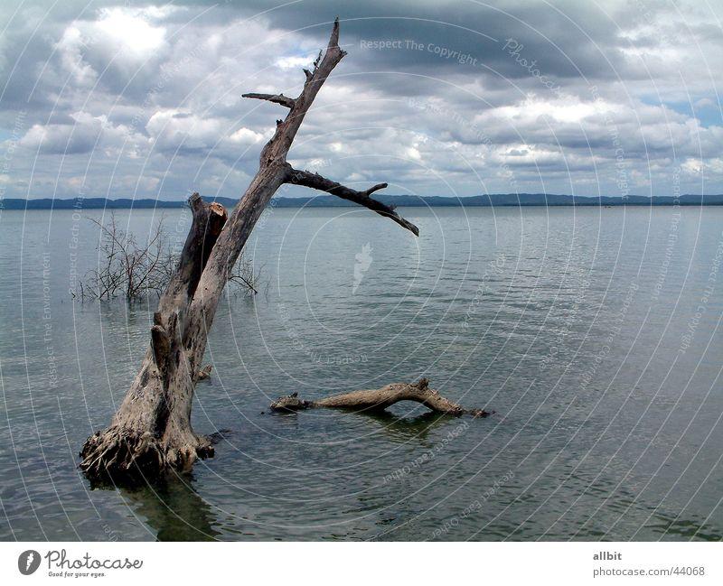 Ilha de Itaparica Wolken Stillleben Baum Baumstamm Brasilien Wasser blau Graffiti Insel Wetter