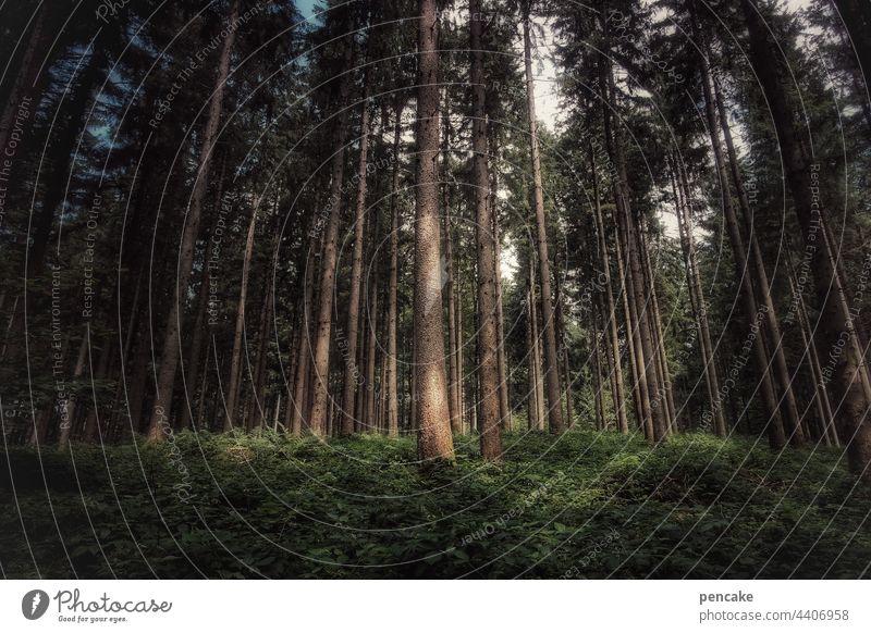 orte der kraft Wald Bäume Fichten Holz Nachhaltigkeit Erholung Entspannung wandern Landschaft Forstwirtschaft Umwelt Klima geheimnisvoll dunkel Kraft