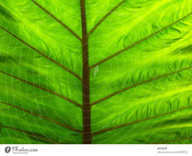 es grünt so grün Pflanze Blatt Geäst durchscheinend