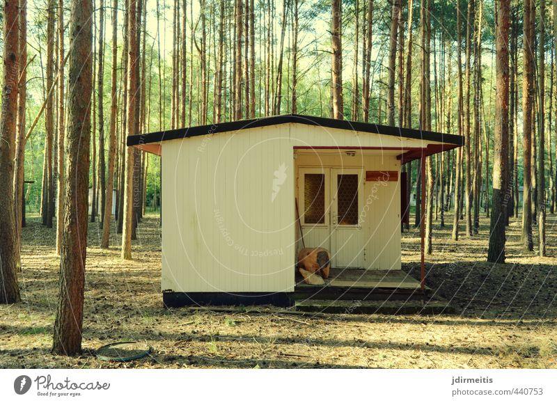 hütte Natur Ferien & Urlaub & Reisen Sommer Baum Erholung Haus Wald Fenster Wand Mauer Fassade Tür Dach retro Hütte Terrasse