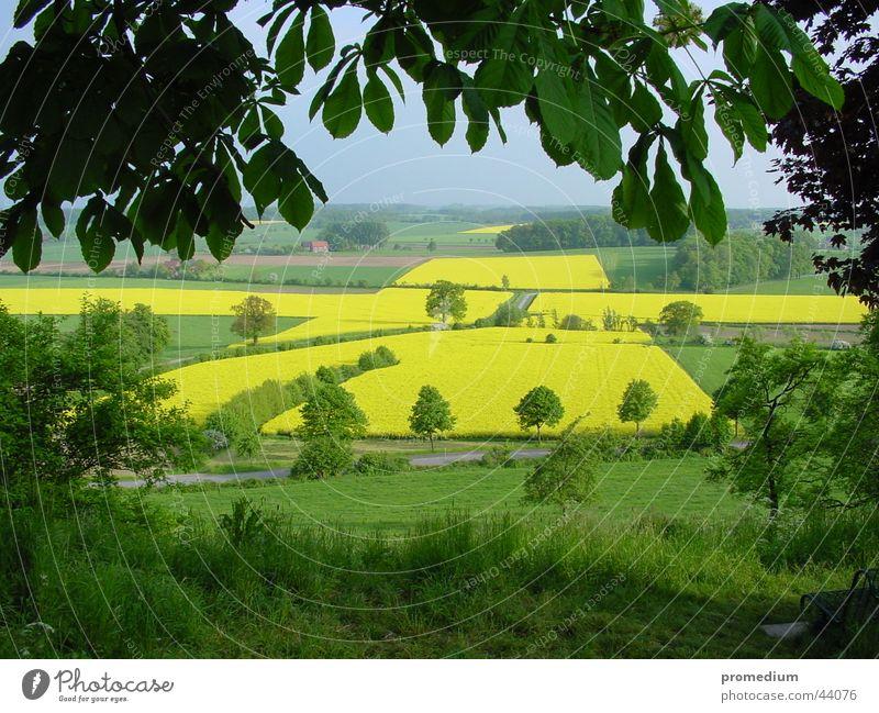 Blick auf Rapskreuz Sommer gelb Feld Rücken Aussicht Aussaat Juni Wallfahrtsort