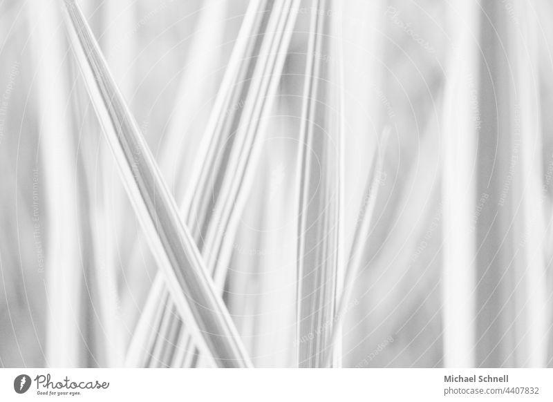 Pflanzenblätter Linien Strukturen & Formen Muster graphisch Hintergrundbild abstrakt Design Streifen minimalistisch