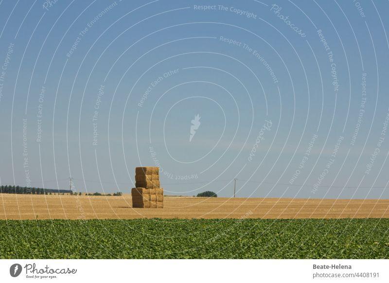 Erntezeit: gestapeltes Heu auf abgemähtem Feld Herbst mähen Landwirtschaft Landschaft Pflanze Futter Stapel Kunstwerk Objekt Turm Wiese Acker Natur Gras Stroh