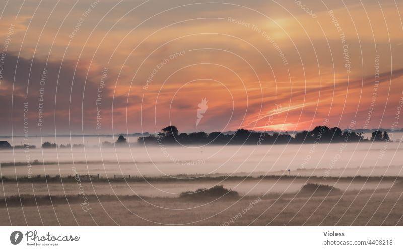 morning has broken - früher Morgennebel zieht über die Felder Sonnenaufgang Nebel Feuchtigkeit Agrar Gatter Morgenrot Tau Weite orange Sicht
