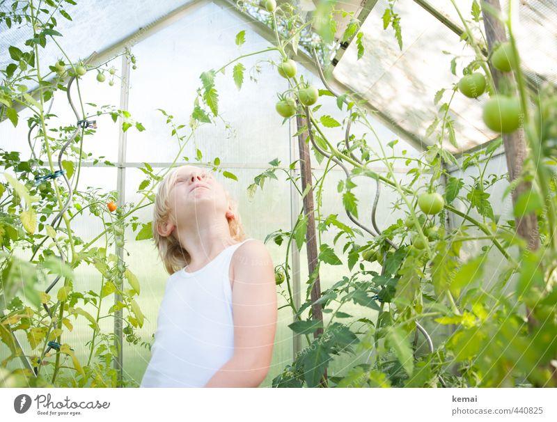 Grüne Tomaten Mensch Kind grün Pflanze Blatt Junge klein Kopf Lebensmittel maskulin blond Kindheit Arme Wachstum Ernährung niedlich