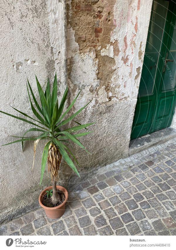 palme. Palme Pflanze topfplanzen grün Blatt Grünpflanze Außenaufnahme Fassade Eingangstür Tür Haus Wand Menschenleer alt Bauwerk Farbfoto Mauer Gebäude trist