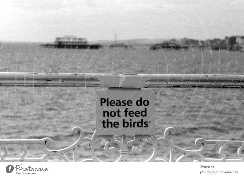 don't feed the birds Meer Schilder & Markierungen Brücke Anlegestelle Geländer England Warnhinweis Großbritannien Badeort Brighton Baracke