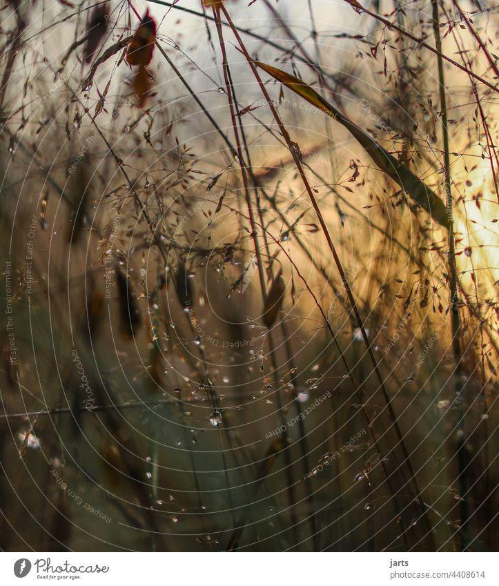 Sommerabend in einer Wiese mit Gras nach dem Regen Sonnenuntergang Licht Schatten Blume Natur Außenaufnahme Farbfoto Pflanze Menschenleer Abend Sonnenlicht