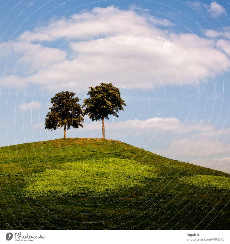 Der kleine Berg Natur Landschaft Himmel Wolken Sommer Schönes Wetter Pflanze Baum Gras Wiese Hügel leuchten stehen hoch natürlich oben blau braun grün weiß