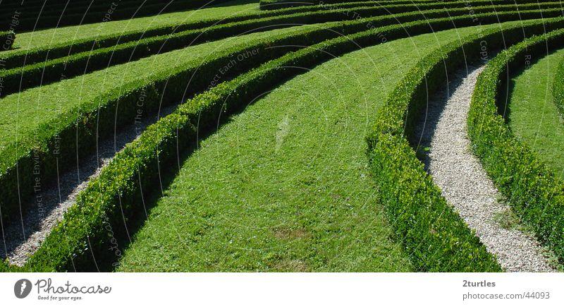 grüne welle Garten Park Sträucher Gartenbau Hecke Irrgarten