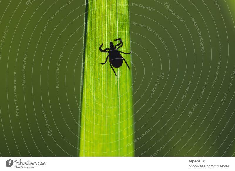 gefährlich Zecke Tier bedrohlich Krankheit Ekel Makroaufnahme Farbfoto Nahaufnahme Angst Tierporträt klein Außenaufnahme Spinne Menschenleer braun zeckenplage