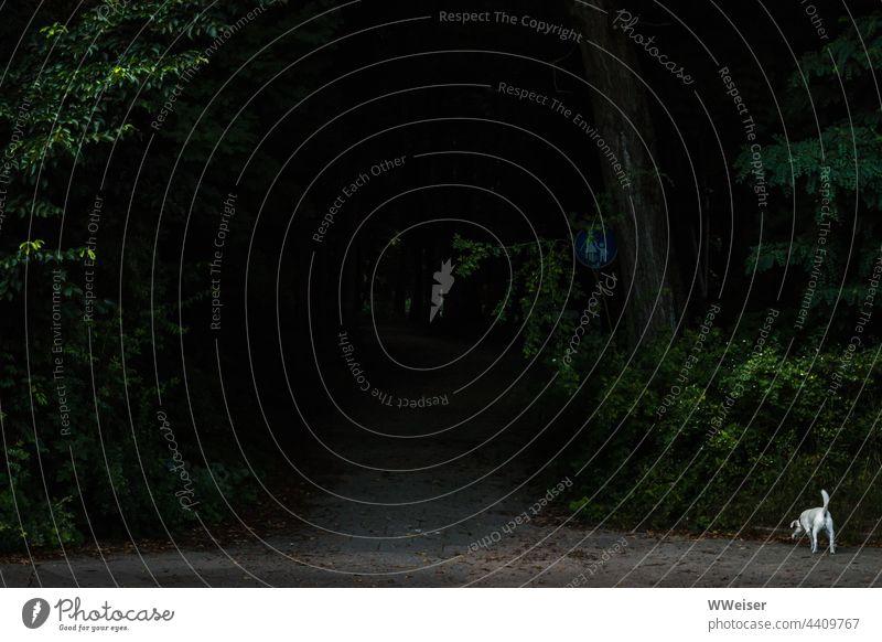 Mütter mit kleinen Kindern gehen diesen dunklen Waldweg sicher nicht gern, aber der kleine Hund traut sich Gehweg Schild Verkehrsschild Fußgänger dunkel