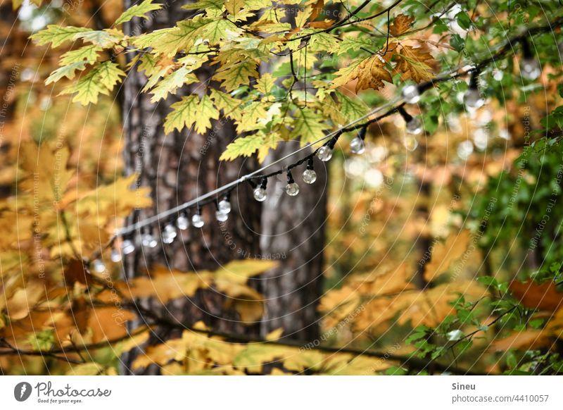 Lichterkette im Herbstwald Glühbirne Beleuchtung Lampe Outdoor-Beleuchtung Dekoration & Verzierung Gartenpartydeko Party Feier & Fest Herbstlaub Herbstfarben