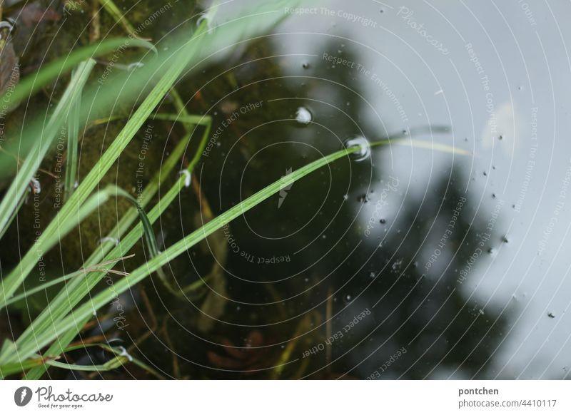 grüne gräser ragen ins wasser und spiegeln sich darin teich pflanzen spiegelung ruhe entspannung meditation natur unschärfe