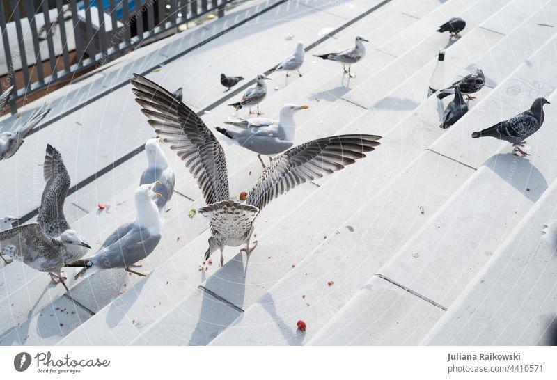Möwenfütterung in Hamburg Vogel Meer fliegen Flügel Möve Tier Freiheit Feder Schnabel See Sommer Natur Küste Ferien & Urlaub & Reisen Ostsee Fischland Nordsee