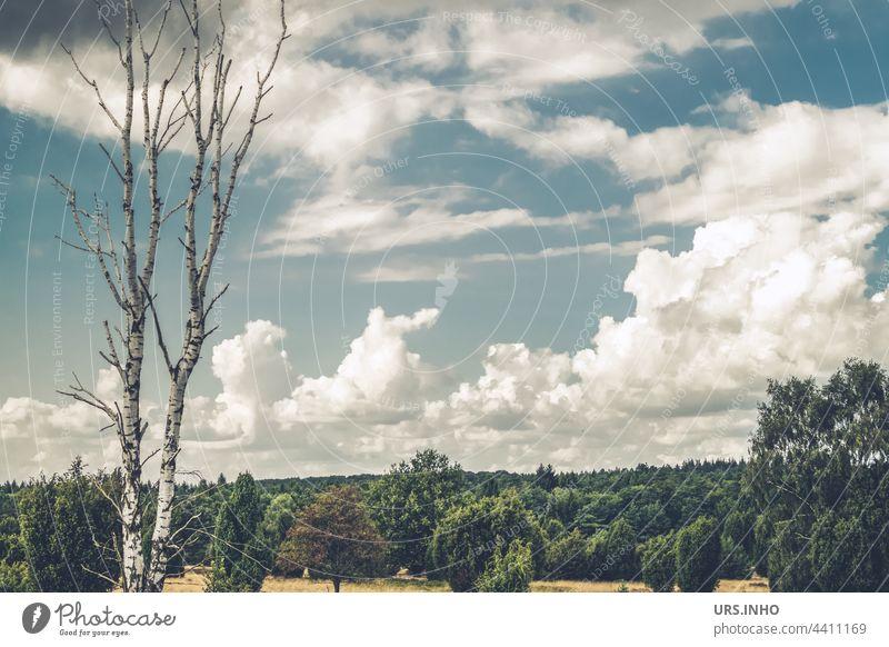 die zwei Baumstämme der kahlen Birke stehen stolz und aufrecht vor einem dunkelgrünen Wald Birkenstamm Baumstamm Stamm Wolken wolkig alleine Stämme twin duo
