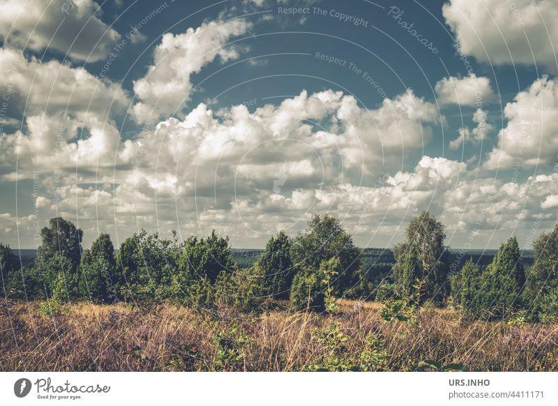 Blick vom Wilseder Berg in die Ferne bei vielen weißen Wolken am Himmel über der idyllischen Landschaft der Lüneburger Heide Natur Farbfoto Baum Sommer