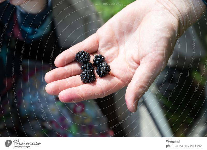 Brombeeren in einer Hand Herbst Wald Früchte Obst Beeren lecker bio Bioprodukte sammeln Erntedank