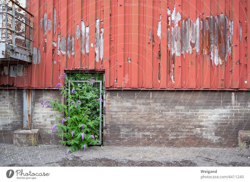 Die Zukunft ist grün Koalition SPD Grüne Politik Wand Mauer Industrie alt Optimismus Wandel rot grau Lostplace