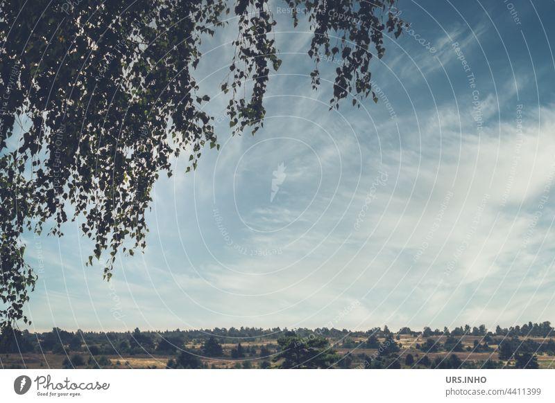 Wie ein Vorhang geben die Äste des kleinblättrigen Baumes den Blick auf die weite Heidelandschaft frei Lüneburger Heide Menschenleer Landschaft Zweig Szene