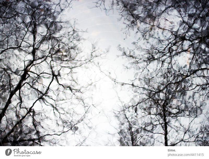 Ordnung im Chaos | Zitterwasser Craquelé baum spiegelung reflexion oberfläche äste ast bäume geheimnis phantasie fluss gemälde natur