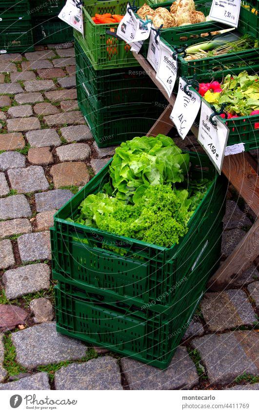 Da haben wir den Salat  Marktfrische Salate  MT Dresden 2021 Gesundheit Ernährung Vegetarische Ernährung Gemüse Lebensmittel nachhaltig Außenaufnahme Qualität