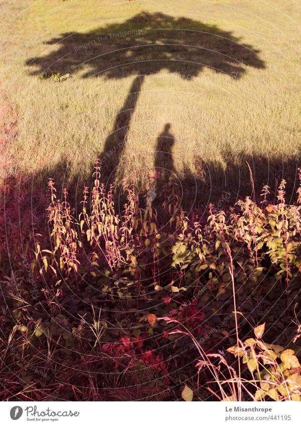 ... and one pill makes you small Mensch feminin Frau Erwachsene Jugendliche 1 Natur Landschaft Sand Sommer Pflanze Baum Gras Sträucher Feld mehrfarbig gelb gold