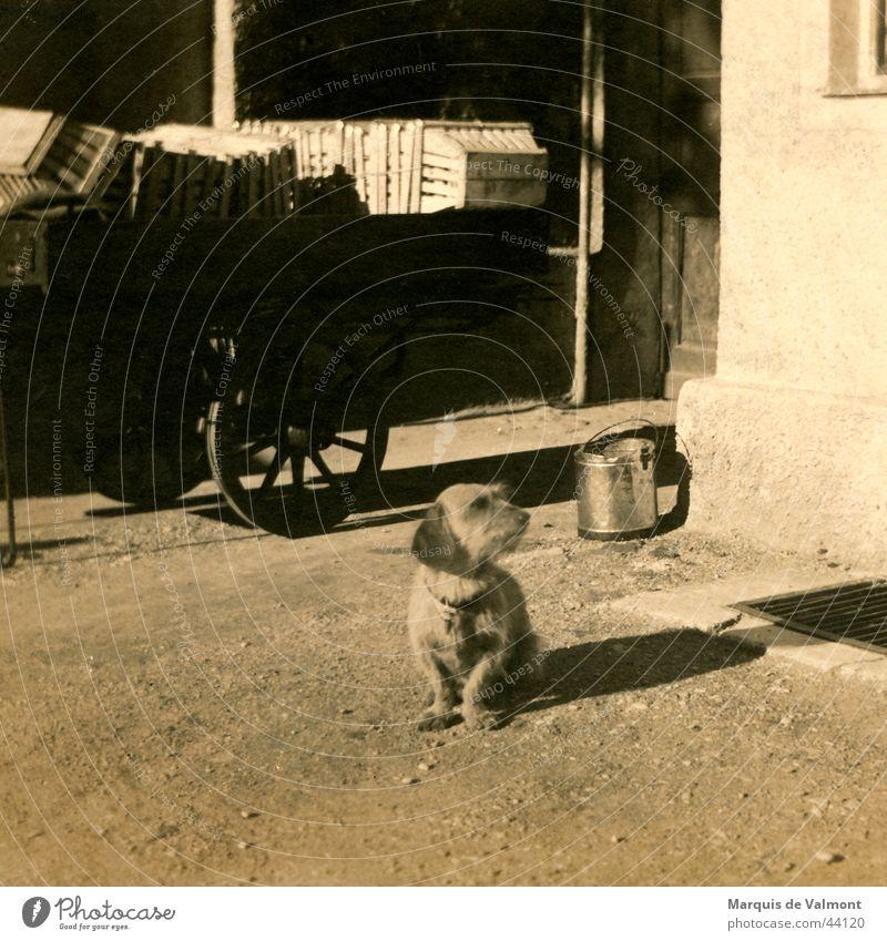 Waldi wartet am Wagen... Hund Dackel Karre Eimer Korb Kiste schwarz weiß historisch Basketballkorb Straße Schatten Sepia alt dog cart bucket road shade crate