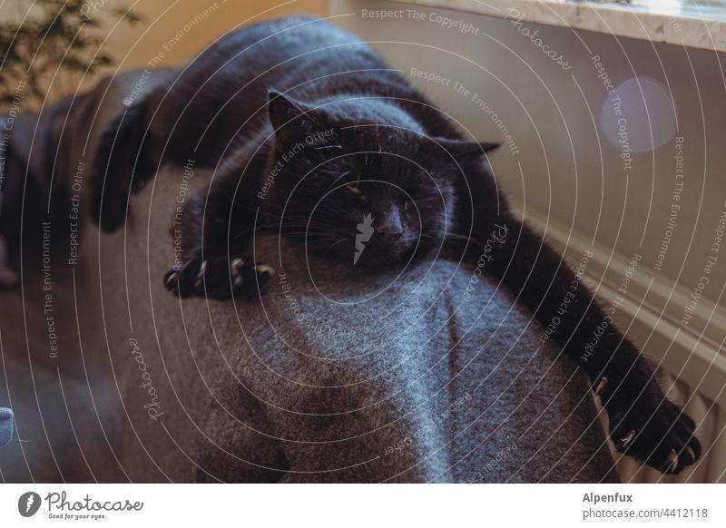 Wie..was...Montag?! Katze Kater relaxen strecken Hauskatze Haustier Tier Fell niedlich Yoga kuschlig Katzenyoga Tierporträt Blick Farbfoto streching Katzenkopf