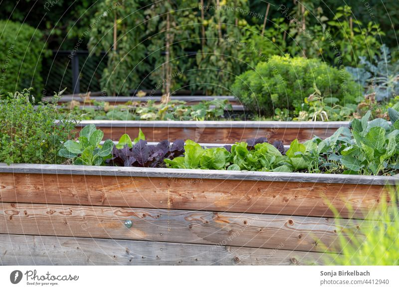 Gemüse- und Salathochbeete im Garten - Biofood aus eigenem Anbau Hochbeet Gemüsehochbeet Salatbeet Beet rückenfreundlich rückenschonend Gemüseanbau Hausgarten