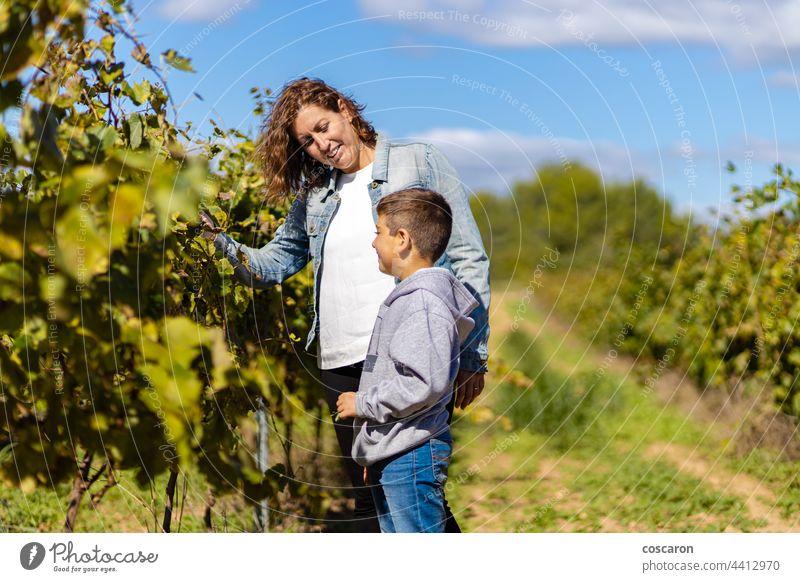 Mutter und Sohn betrachten Trauben in einem Weinberg Ackerbau Herbst Hintergründe Junge Kaukasier Kind Kindheit Kinder Selbstvertrauen Kopie Landschaft Europa