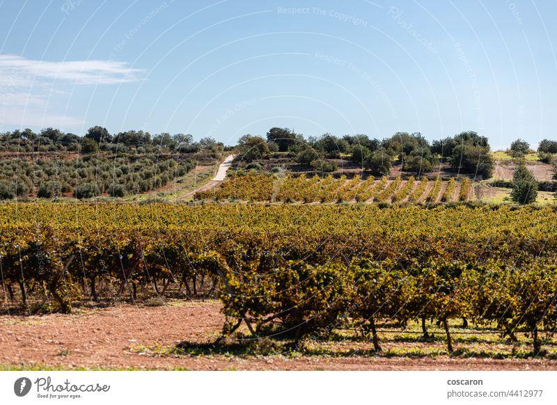 Weinberge in einem Priorat, Katalonien, Spanien Ackerbau Hintergrund blau Postkarte Landschaft Europa Bauernhof Frucht Traube Trauben Weinrebe grün