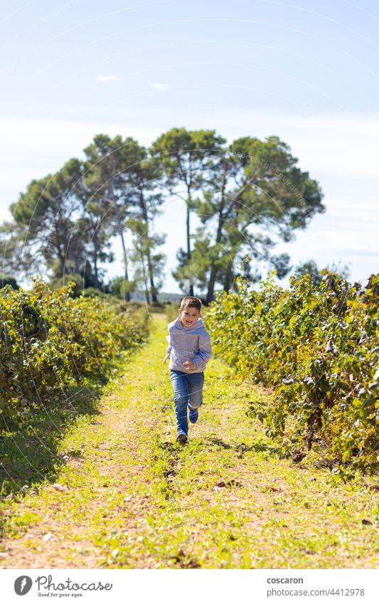 Kleiner Junge läuft und wirft einen Weinberg Ackerbau Herbst Baby Bruder Pflege Kind Kindheit Kinder farbenfroh Land Familie Feld Lebensmittel Frucht Spaß